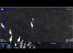 Enlace a Unas vacas ayudan a la policía a detener a un sospechoso que huía por el campo
