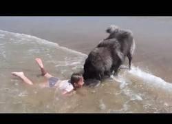 Enlace a El gran amor de este perro a su dueño que la rescata de ser ahogada del mar