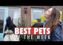 Enlace a Las mascotas más bonitas de esta semana de las que te enamorarás al verlas