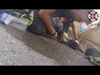 Los bomberos de Córdoba rescatan a un perrito a punto de morir en un edificio en llamas