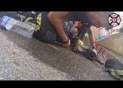 Enlace a Los bomberos de Córdoba rescatan a un perrito a punto de morir en un edificio en llamas