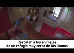 Enlace a Milagroso rescate a animales de un refugio