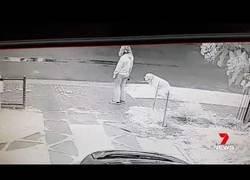 Enlace a No recoge las heces de su perro en la calle y se lleva como castigo algo que la ridiculiza de por vida