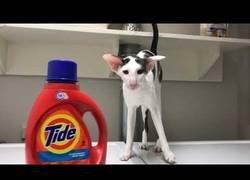 Enlace a El gato que espera que termine la lavadora para meterse dentro