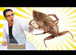 Enlace a Los supergusanos se dan un festín con una cucaracha