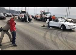 Enlace a Tres mustangs forman el caos deteniendo todo el tráfico en el puente de Oakland-San Francisco para hacer derrapes