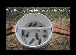 Enlace a El canal de YouTube que te enseña a atrapar ratones de mil y una manera