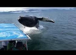 Enlace a Esta ballena sorprende a todos los turistas y los baña por completo con un salto impresionante