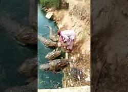 Enlace a Este hombre alimenta a varios cocodrilos como si fueran su mascota a pocos centímetros de él