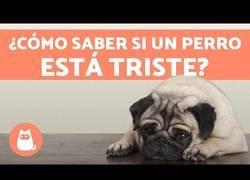 Enlace a Depresión en los perros - Síntomas y qué hacer