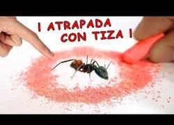 Enlace a Mitos sobre hormigas