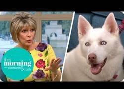 Enlace a Afirma que su perro es vegetariano y hace el ridículo en TV +facepalm