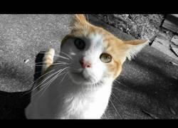 Enlace a Un gato callejero muy cariñoso