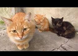 Enlace a Dando de comer a una asustadizos gatos
