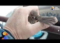 Enlace a Ayudando a un indefenso pájaro que se quedó atrapado con su pata congelada al metal