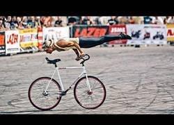 Enlace a La increíble habilidad con la bici de Nicole Frybortova que te dejarán alucinando
