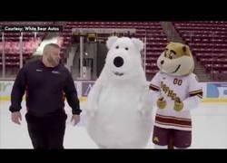 Enlace a Oso polar sobre el hielo. Que puede salir mal