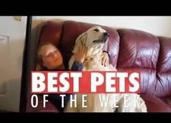 Enlace a Los animales más bonitos que hemos conocido esta semana en la red