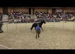 Enlace a Se llama Monty Roberts, uno de los mejores entrenadores de caballos y pone a punto a uno para cabalgarlo en 30 minutos