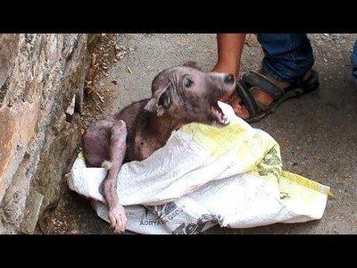 El brutal cambio de este perrito tras ser rescatado en las calles de la India