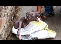 Enlace a El brutal cambio de este perrito tras ser rescatado en las calles de la India