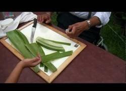 Enlace a Así es el arte de cortar la planta del aloe vera