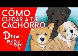 Enlace a Trucos para cuidar bien a tu cachorro, según Draw My Life en Español