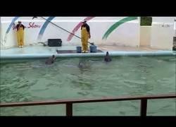 Enlace a Un vídeo que rompió mi corazón: han abandonado a un delfín en un parque zoológico en Japón que cerró hace años