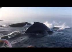 Enlace a El baile de 3 ballenas