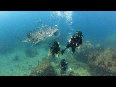 La paz de un tiburón ballena con un submarinista