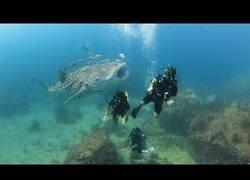 Enlace a La paz de un tiburón ballena con un submarinista