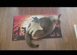 Enlace a Este gato disfruta al máximo mientras le masajea el trasero una mano terrorífica de Halloween