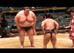 Enlace a El luchador de Sumo más gordo del mundo con 283kg