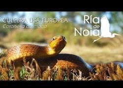 Enlace a Una rareza de la naturaleza, y la tenemos en España