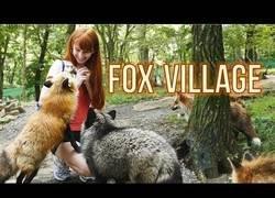 Enlace a La adorable villa de zorros que se encuentra en Zao (Japón)