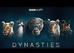 Enlace a Dynasties: el tráiler del nuevo documental de la BBC que promete una barbaridad