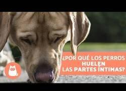 Enlace a ¿Por qué los perros huelen las partes íntimas?