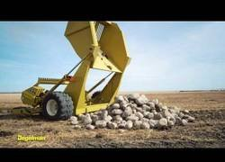 Enlace a Así es el funcionamiento de una cosechadora de piedras de 10 hileras