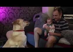 Enlace a Este bebé se lo pasa en grande al ver los 'grandes' trucos que hace su mascota