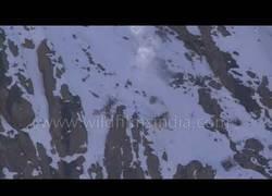 Enlace a La volada espectacular de este leopardo para cazar en plena montaña del Himalaya