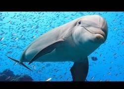 Enlace a El majestuoso mundo de los delfines [inglés con subtítulos]