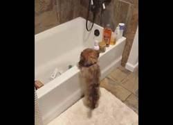 Enlace a Este perrito cree que es un gato