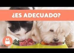 Enlace a ¿Los gatos pueden comer comida de perro?