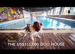 Enlace a Este hombre ha comprado una mega mansión de 500.000 solamente para su perro