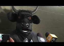 Enlace a El curioso momento en el que un entrenador de hockey se presenta a rueda de prensa con la cabeza de un toro