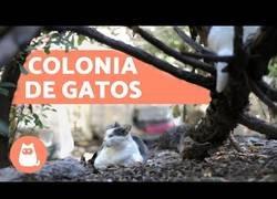 Enlace a Colonias de gato