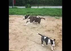 Enlace a Perro se vuelve loco en el parque