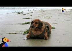 Enlace a Este perro cree que es una foca [Inglés]
