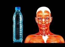 Enlace a Esto es lo que pasa cuando te alimentas solo con agua