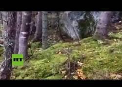 Enlace a Captan un bosque 'respirando' en Canadá